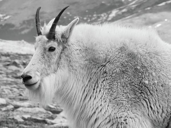 Wall Art - Photograph - Mount Evans Billy B W by Connor Beekman