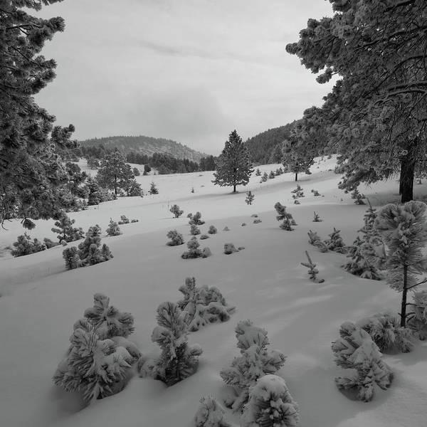 Photograph - Mount Falcon Black And White Winter Landscape by Cascade Colors