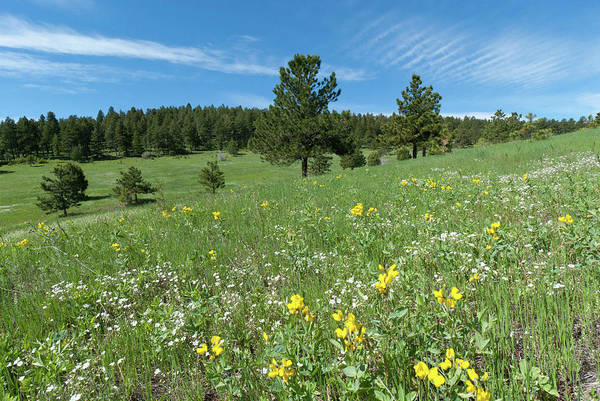 Photograph - Mount Falcon Spring Landscape by Cascade Colors