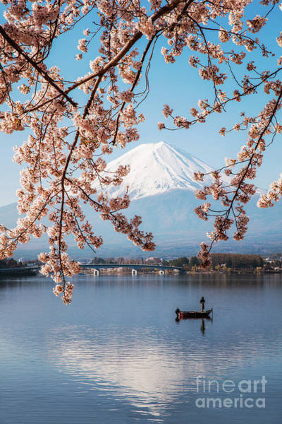 Wall Art - Photograph - Mount Fuji With Cherry Trees, Fuji Five Lakes, Japan by Matteo Colombo