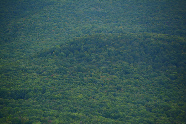 Photograph - Mount Greylock Reservation's Trees by Raymond Salani III