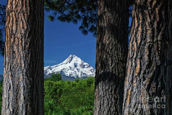 Photograph - Mount Hood From Draper Girls Farm by Doug Sturgess