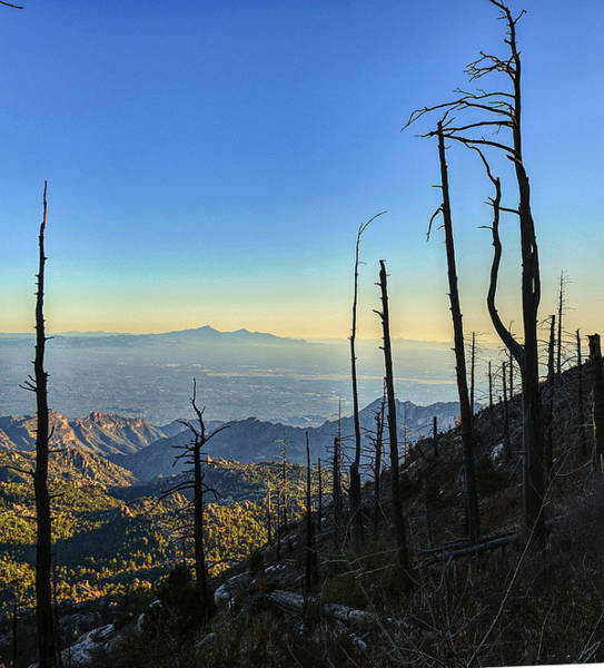 Photograph - Mount Lemmon Summit Vista by Chance Kafka