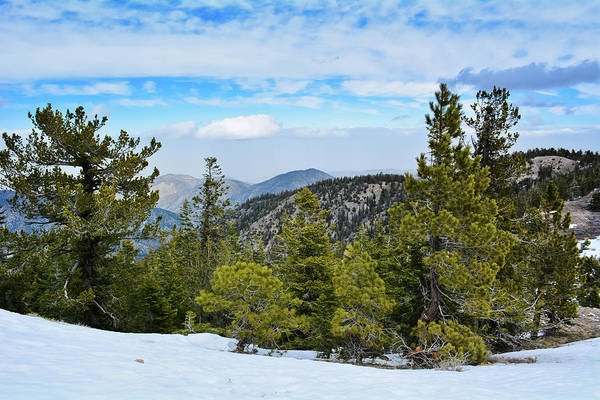 Photograph - Mount Pinos Forest by Kyle Hanson