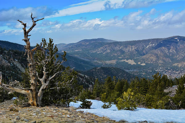 Photograph - Mount Pinos Los Padres National Forest by Kyle Hanson
