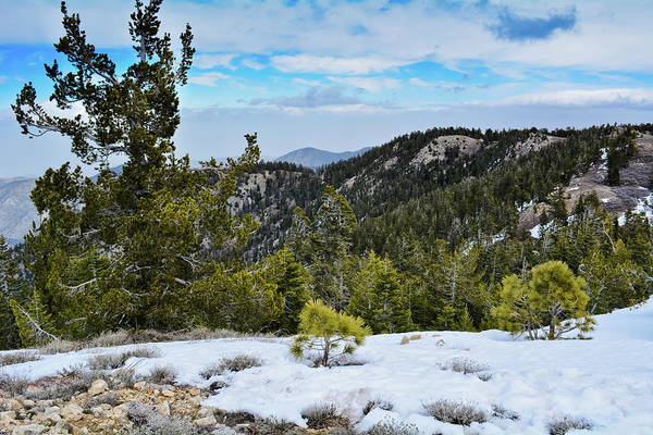 Photograph - Mount Pinos Snow by Kyle Hanson