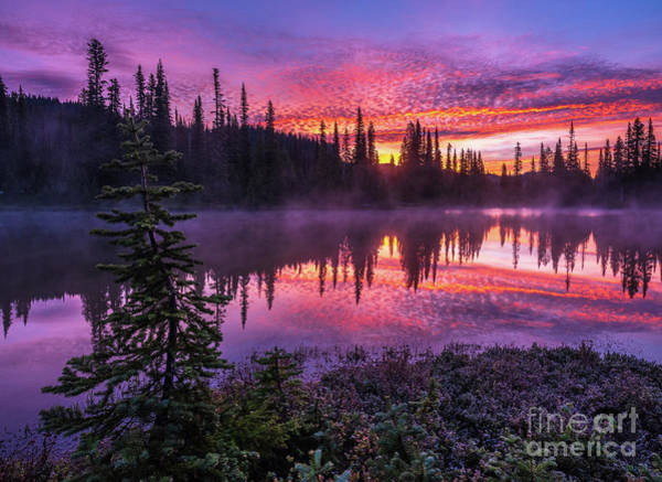 Wall Art - Photograph - Mount Rainier Reflection Lakes Frosted Sunrise Mist by Mike Reid