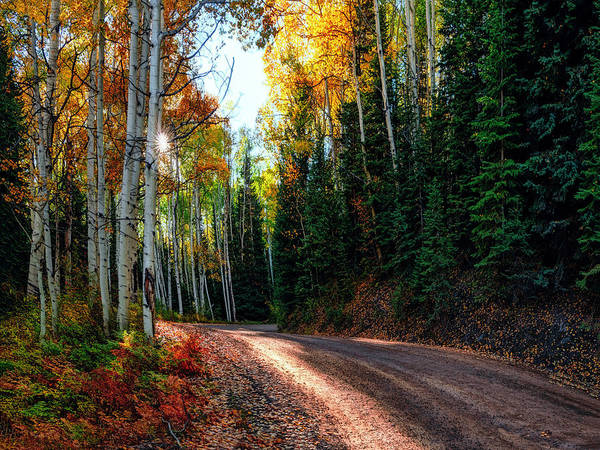 Photograph -  Mountain Aspen Autumn Road by OLena Art Brand