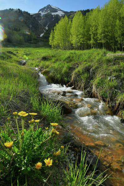 Photograph - Mountain Creek Near Red Mountain Pass by Ray Mathis