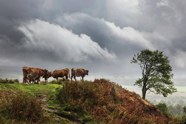 Photograph - Mountain Farmlands Of Scotland by Debra and Dave Vanderlaan