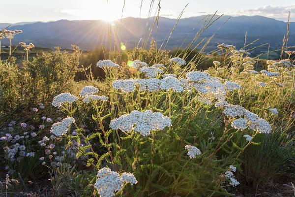 Photograph - Mountain Flowers by Kristopher Schoenleber