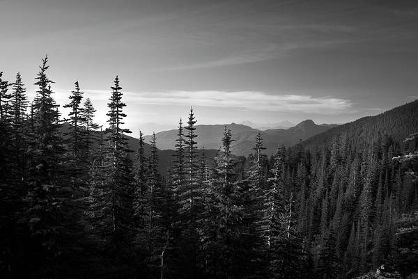 Photograph - Mountain Forest by Yulia Kazansky