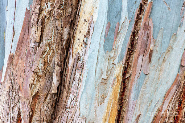 Photograph - Mountain Gum Bark by Tim Gainey