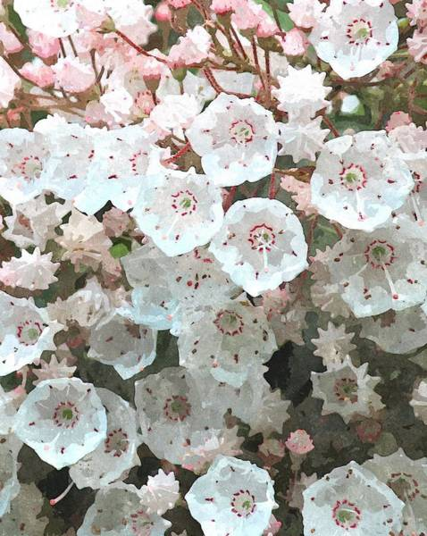 Kalmia Photograph - Mountain Laurel 2018b by Cathy Lindsey