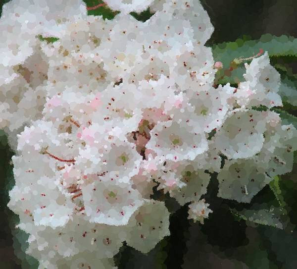 Kalmia Photograph - Mountain Laurel 2018e by Cathy Lindsey