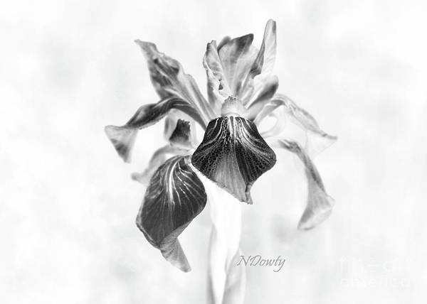Photograph - Mountain Lily by Natalie Dowty