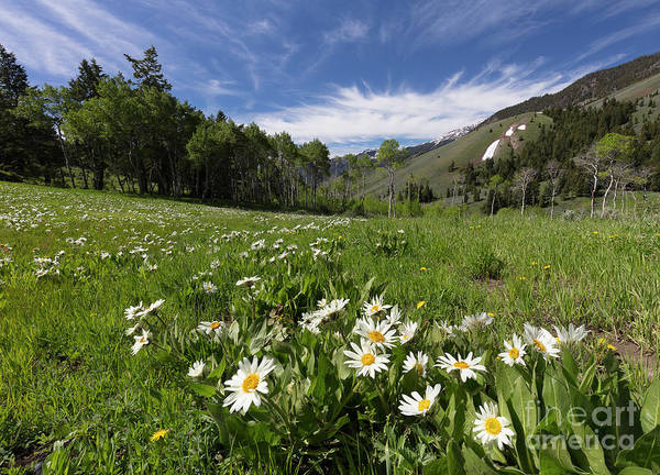Wall Art - Photograph - Mountain Meadow by Idaho Scenic Images Linda Lantzy