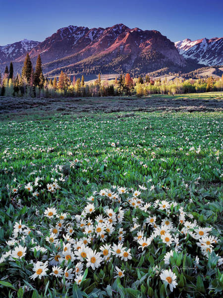 Wall Art - Photograph - Mountain Meadow In Spring by Leland D Howard