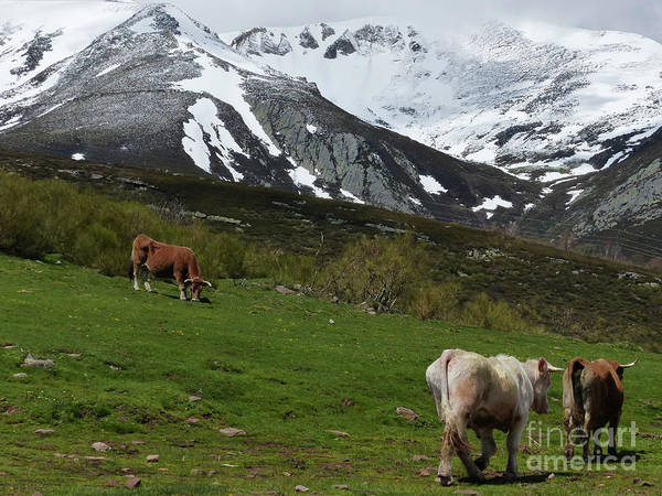 Photograph - Mountain Pastures - Cantabia by Phil Banks