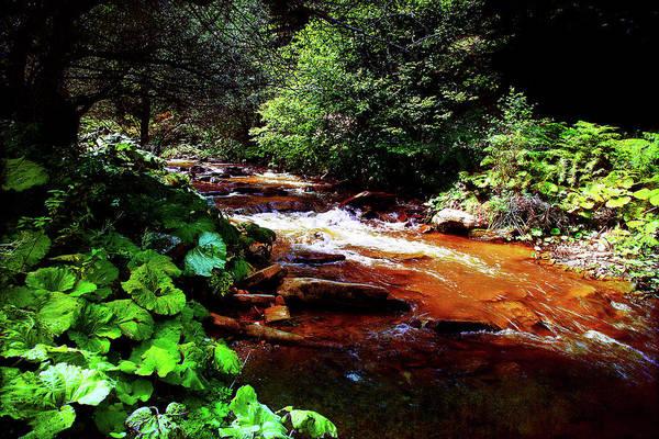 Photograph - Mountain Stream by Milena Ilieva