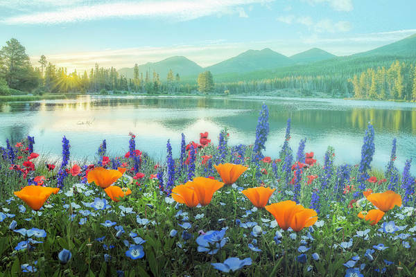 Wall Art - Photograph - Mountain Summer Blooms Misty Morning by Debra and Dave Vanderlaan