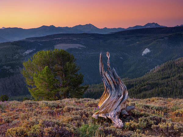 Altitude Photograph - Mountain Wood by Leland D Howard