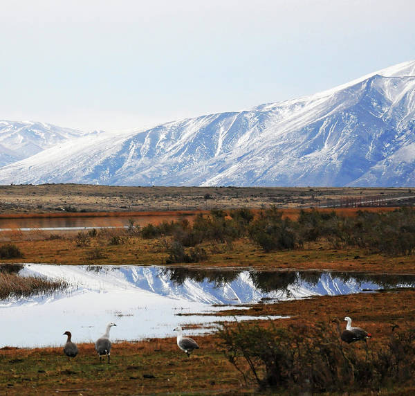 Snow Goose Photograph - Mountains And Reflection by Edith Polverini
