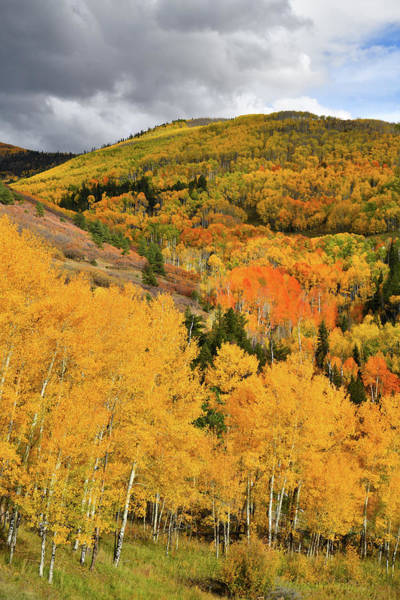 Photograph - Mountains Burst With Fall Color Along Last Dollar Road by Ray Mathis