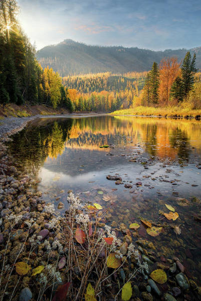 Photograph - Mountains Of Gold / Mcdonald Creek, West Glacier  by Nicholas Parker