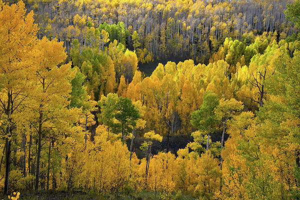 Photograph - Mountainside Aspens At Woods Lake by Ray Mathis