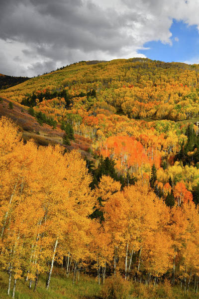 Photograph - Mountainside Of Fall Color Along Last Dollar Road by Ray Mathis