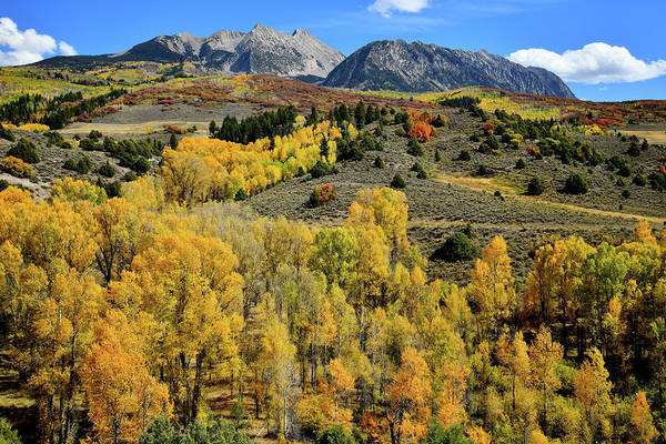 Photograph - Mountainside Of Glowing Aspens Along Highway 133 by Ray Mathis