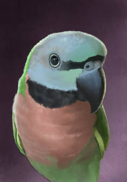 Parrot Digital Art - Moustache Parakeet by KC Gillies