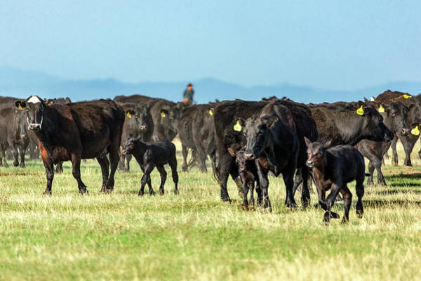 Wall Art - Photograph - Moving Herd by Todd Klassy