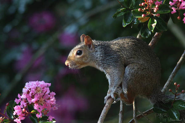Photograph - Mr. Squirrel Looking So Cute And Innocent by Trina Ansel