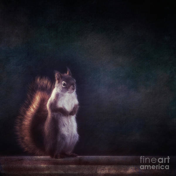 Wall Art - Photograph - Mr. Squirrel by Priska Wettstein