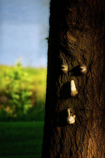 Wall Art - Photograph - Mr Tree Says Shhhh by Thomas Woolworth