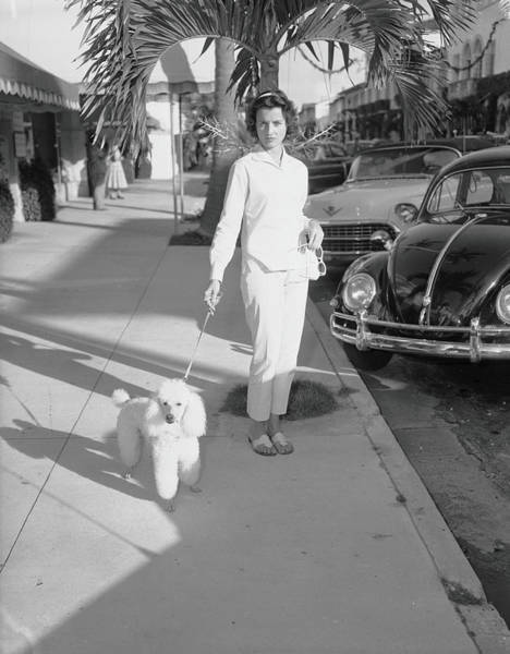 Poodle Photograph - Mrs. Wrightsman Walks Her Poodle by Bert Morgan