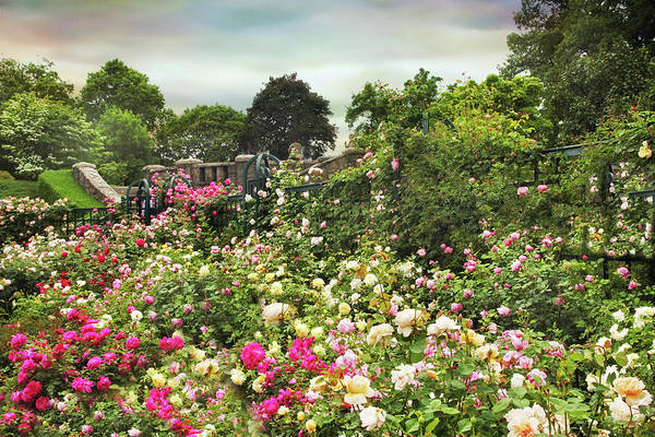 Photograph - Replendent Rose Garden by Jessica Jenney
