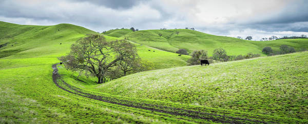 Wall Art - Photograph - Mt. Diablo Spring Hillside by Scott McGuire