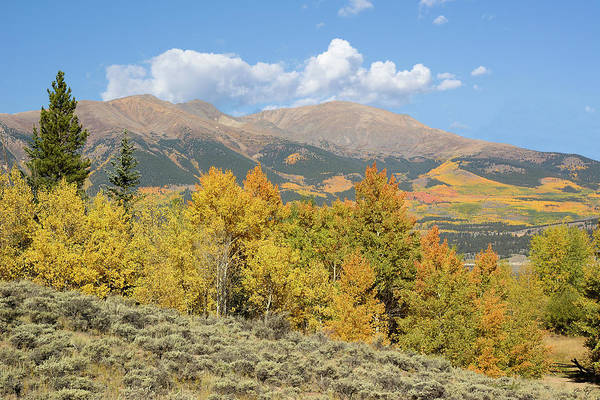 Photograph - Mt. Elbert Autumn by Aaron Spong