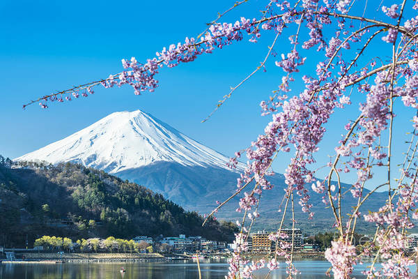 Wall Art - Photograph - Mt Fuji And Cherry Blossom At Lake by Skyearth