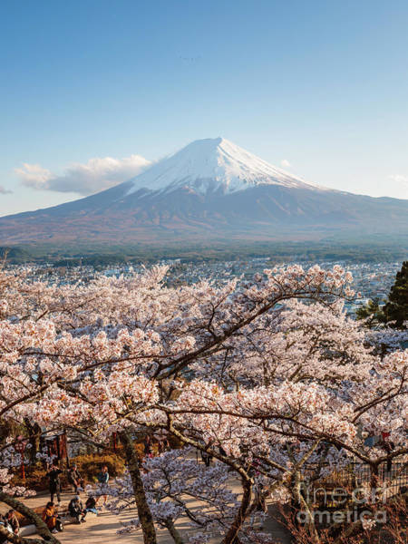 Wall Art - Photograph - Mt. Fuji And Cherry Blossoms In Spring, Japan by Matteo Colombo