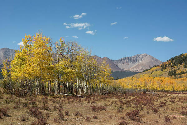 Photograph - Mt. Guyot Autumn by Aaron Spong