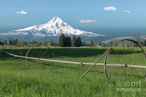 Wall Art - Photograph - Mt. Hood Splendor by Sandra Bronstein