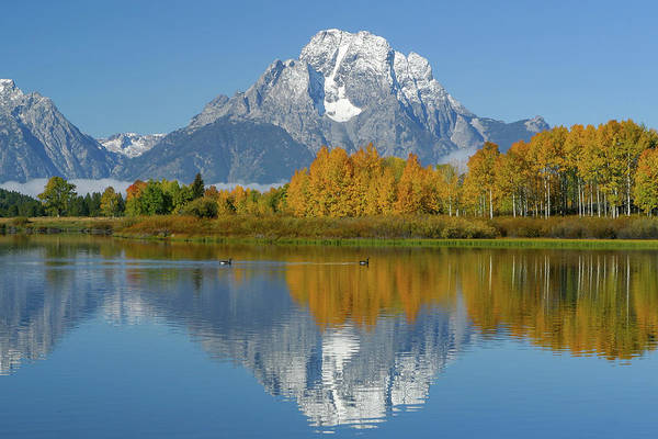 Photograph - Mt. Moran Reflection by Ronnie and Frances Howard