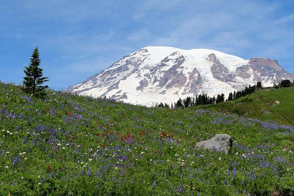Photograph - Mt. Rainier Wildflowers - 2 by Christy Pooschke