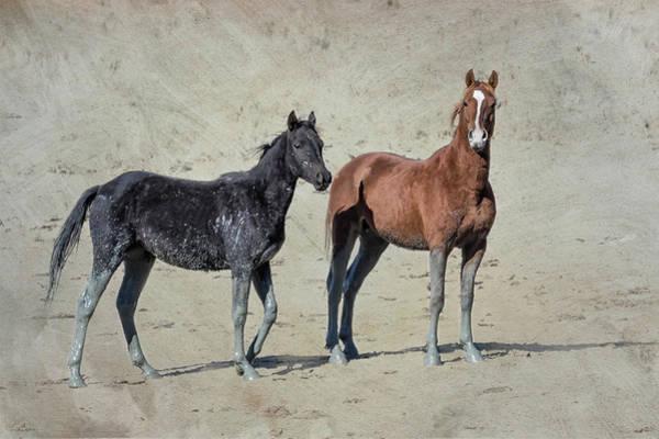 Photograph - Mud Stockings by Belinda Greb