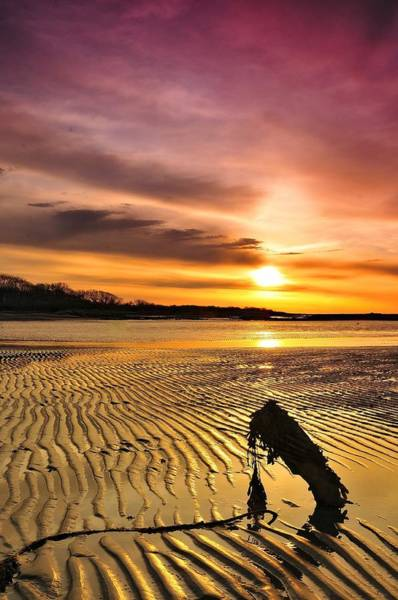 Seaweed Photograph - Muddy Sunrise by Frameworthyfotography By Thadd