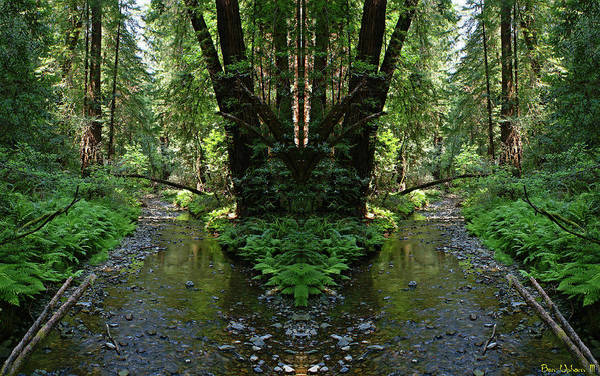Photograph - Muir Woods Mirror #1 by Ben Upham III